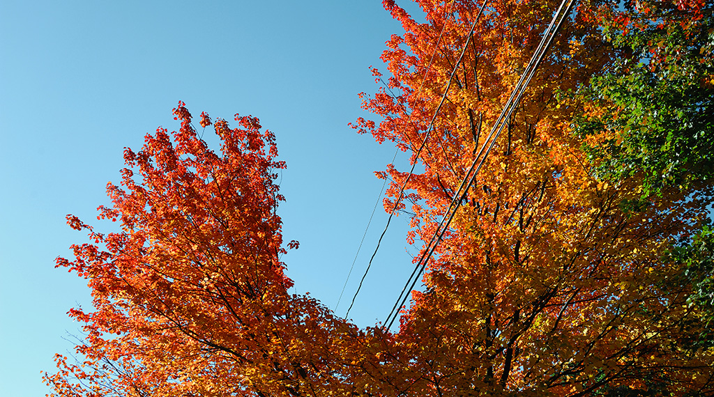 Trees and Power Lines