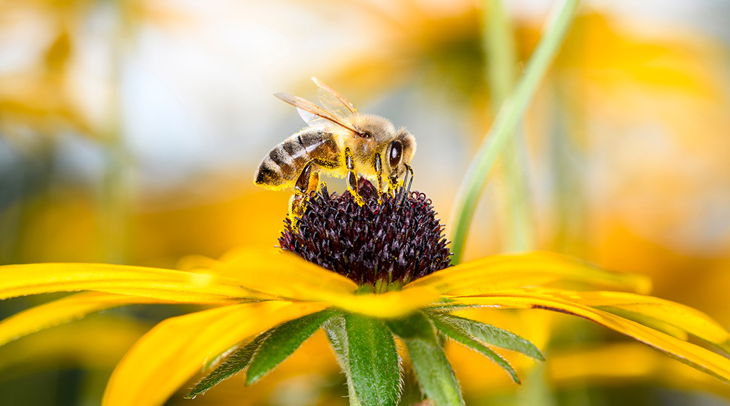 Creating pollinator-friendly gardens and landscapes