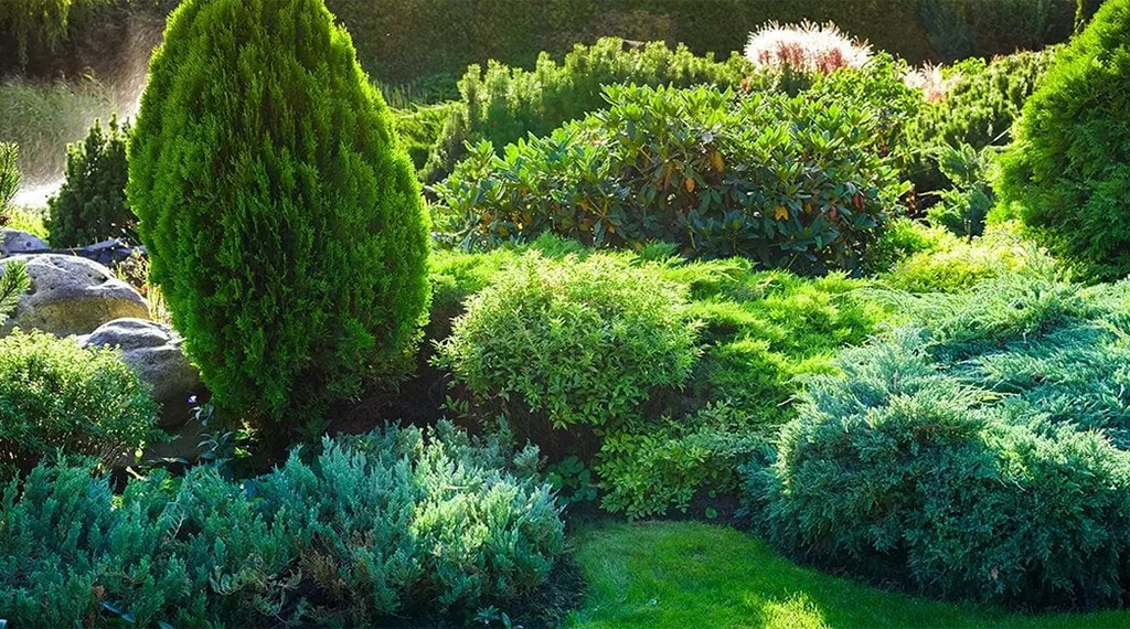 5 reasons to plant evergreens