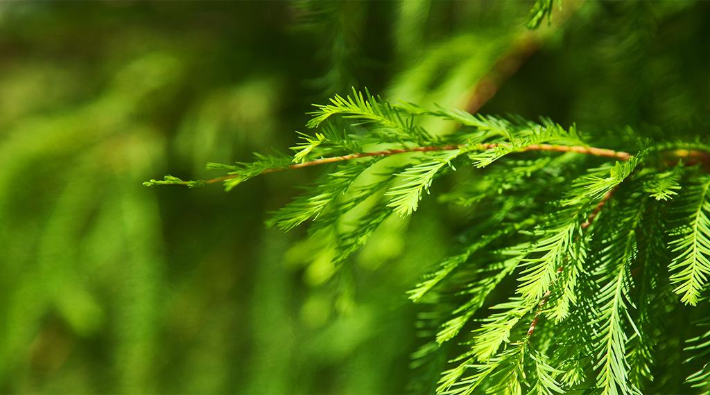 Eliminating evergreen errors