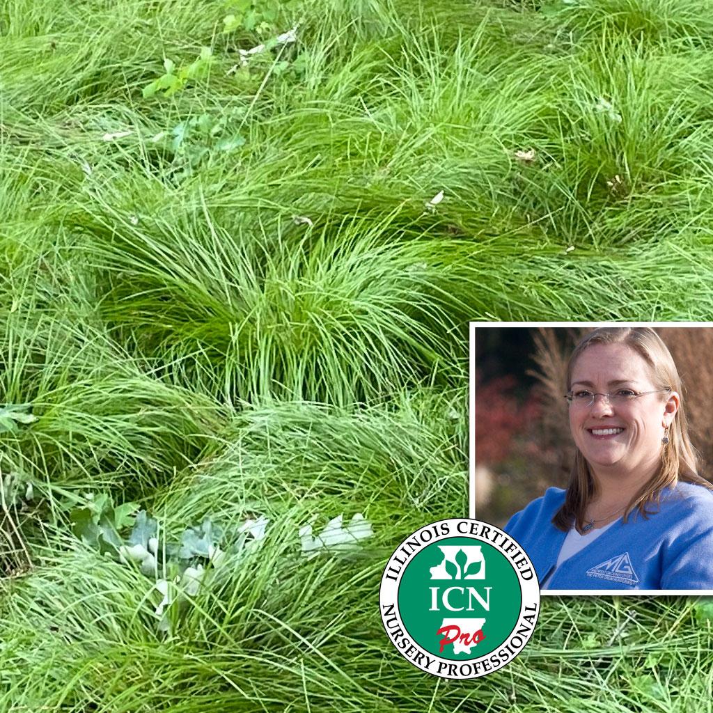 Pro Plant Recommendation