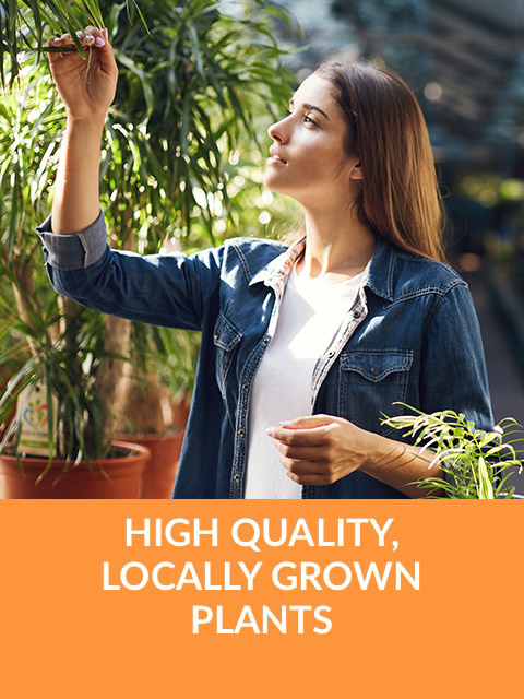 High Quality, Locally Grown Plants