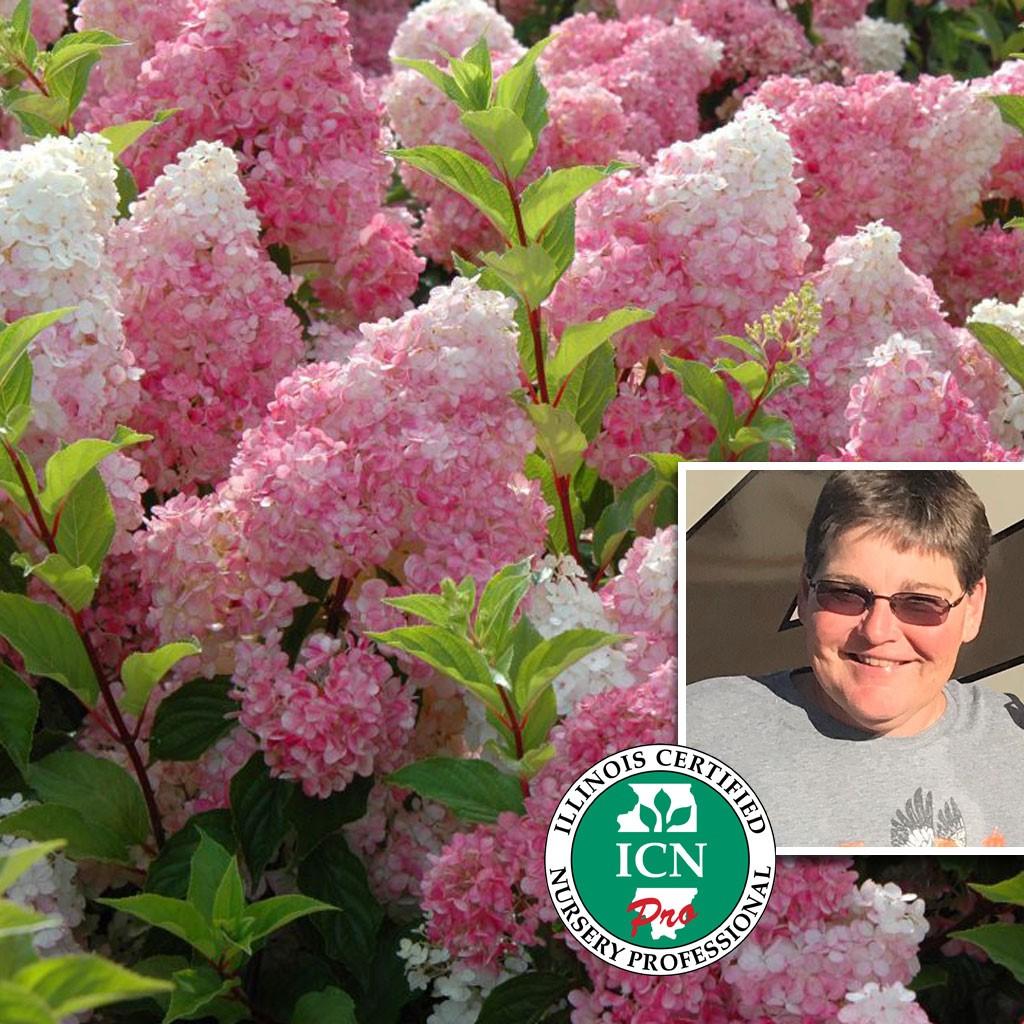Patty Brockmeyer, Recommends Vanilla Strawberry Hydrangea
