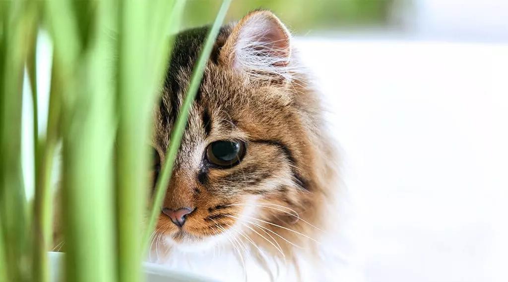 Perfectly pet-safe houseplants