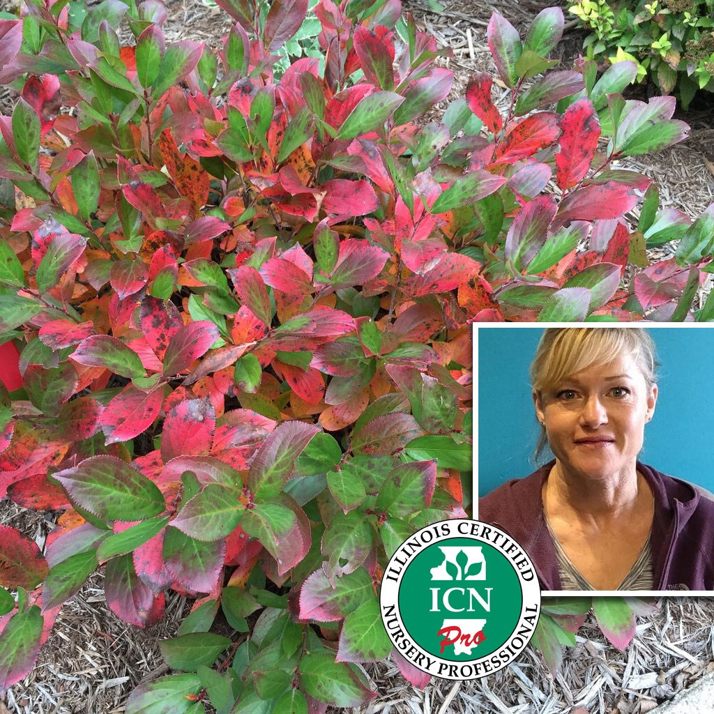 Elaine Peoples, Recommends Low Mound Aronia