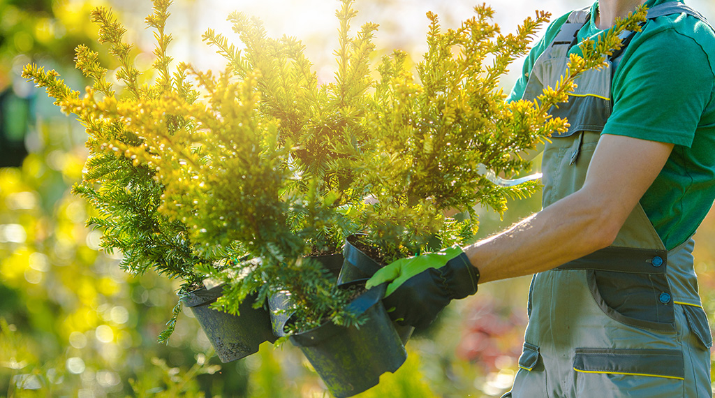Protecting your landscape investment