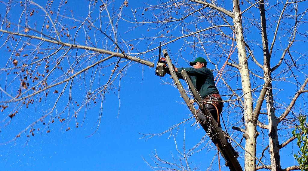 Over trimming trees