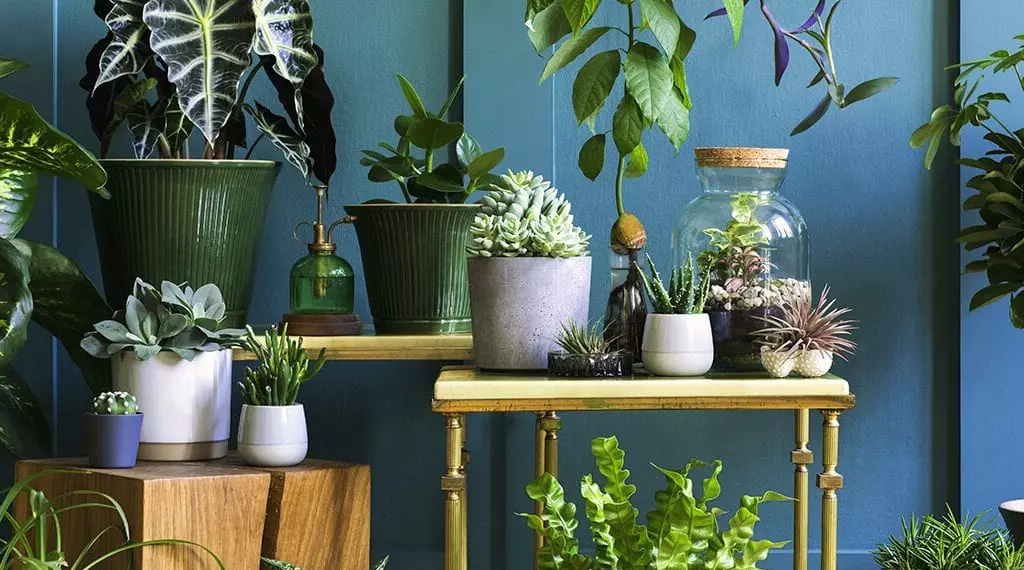 light-loving houseplants
