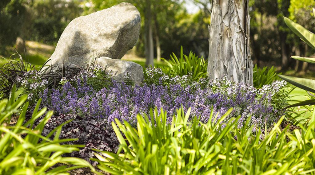 12_Underutilized_Landscape_Plants