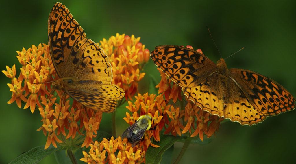 Bees & Butterflies Need Love Too!