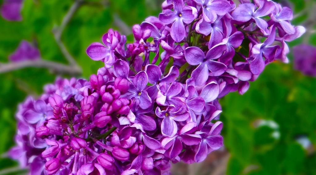 Fragrant Gardens Make Your Backyard Heaven