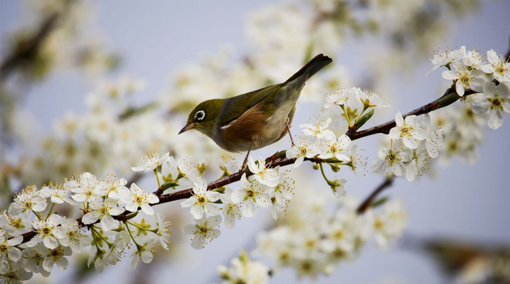 How Fruiting Plants and Birds Support Each Other