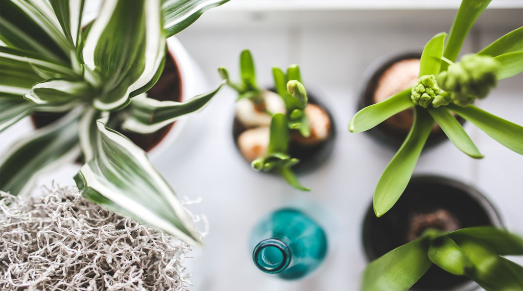 Creating a Haven for Happy Houseplants