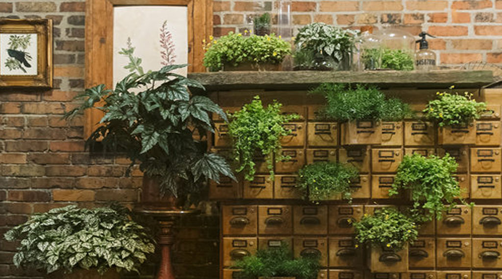 How to Keep Houseplants Happy
