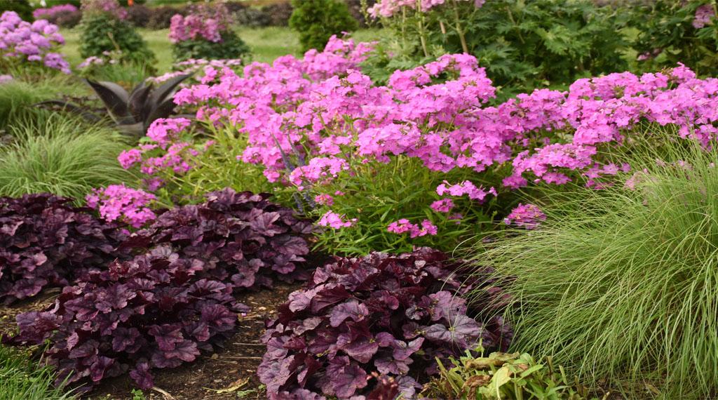 Perennial flowers in a landscape arrangement