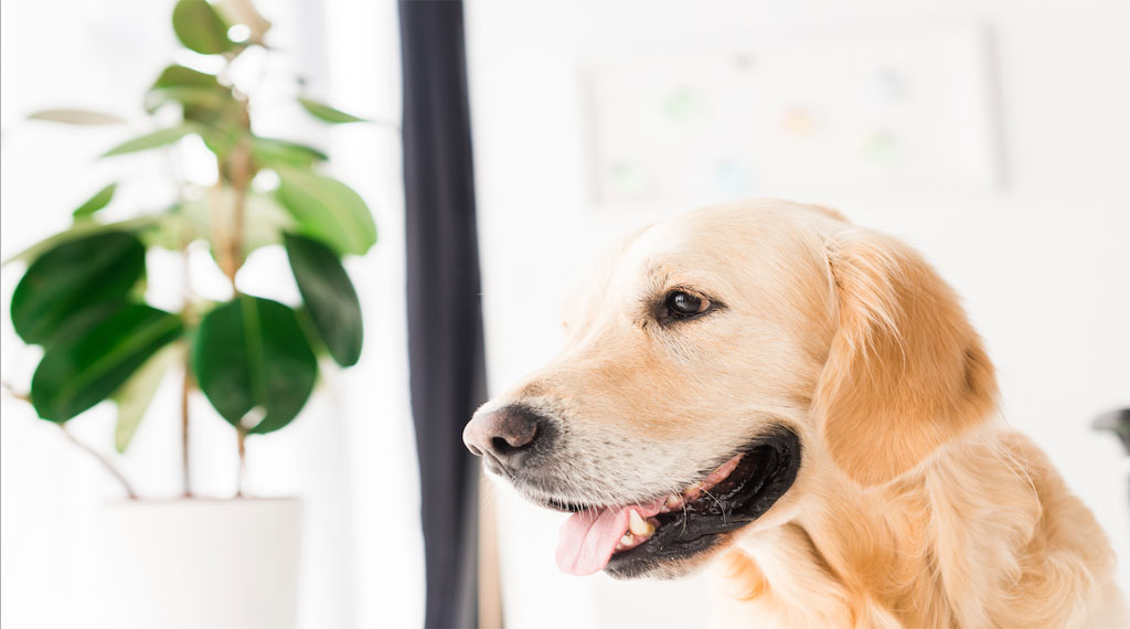 Which houseplants are safe for pets