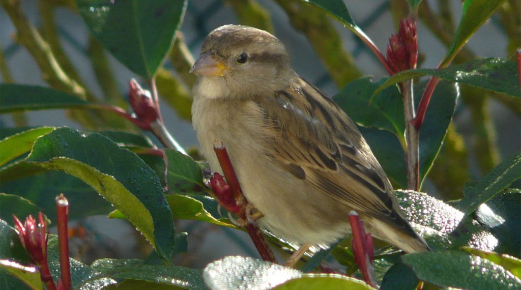 Plants that Bring Birds Back