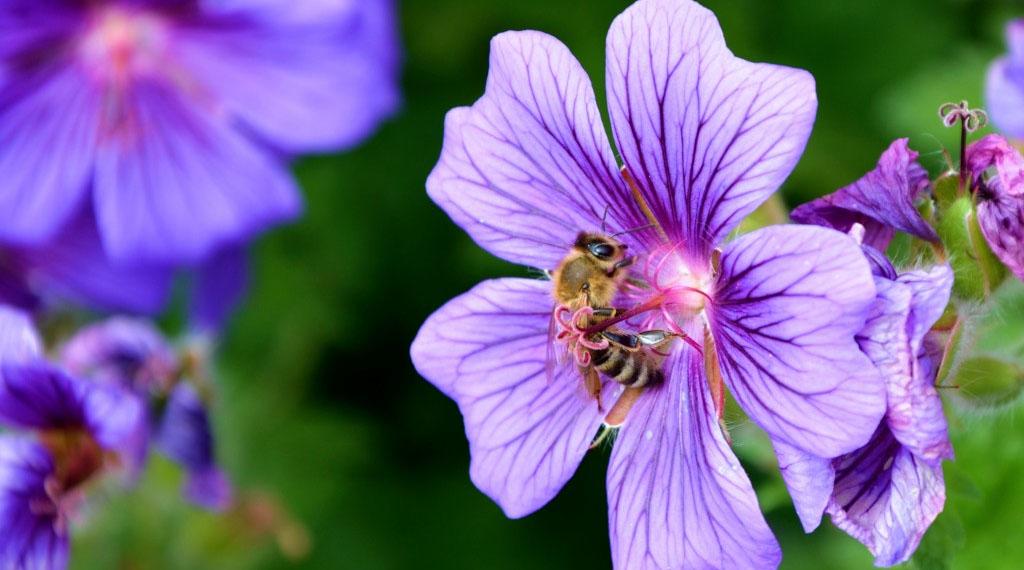 Selecting Plants for a Pollinator Garden