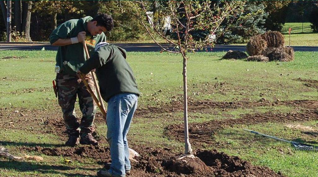 Proper Planting Trees & Shrubs