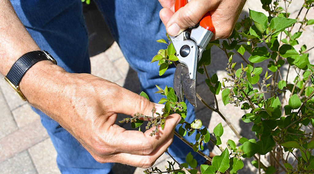 Proper Pruning Protocol