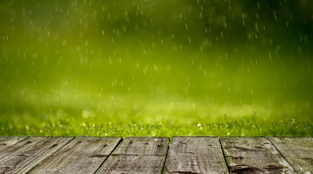 What to Look for When the Weather is Wet