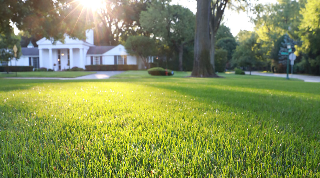 Success with grass seed