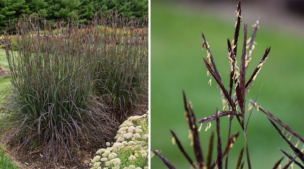 Low-Maintenance Plants for Busy People