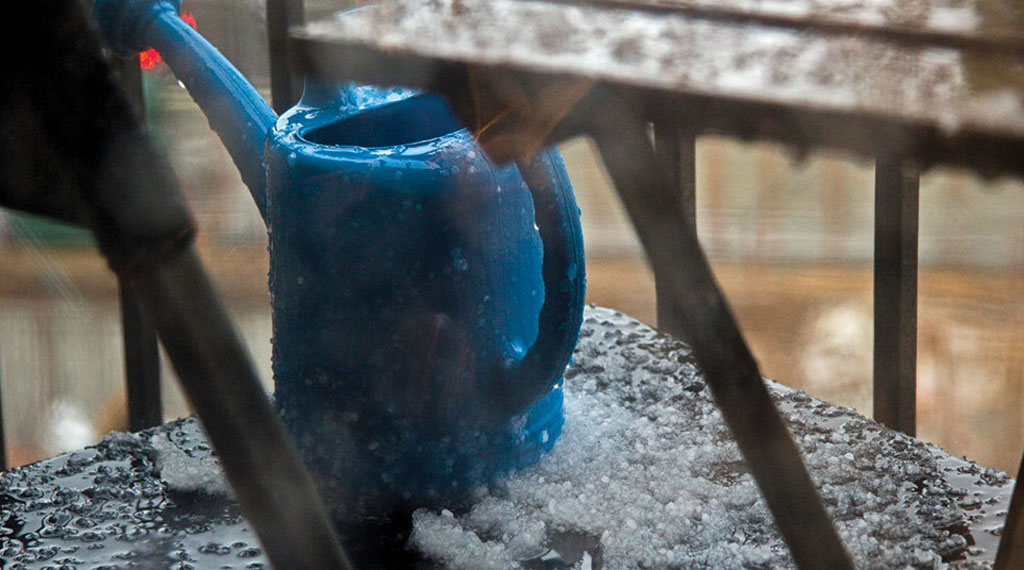Why you should water plants in winter
