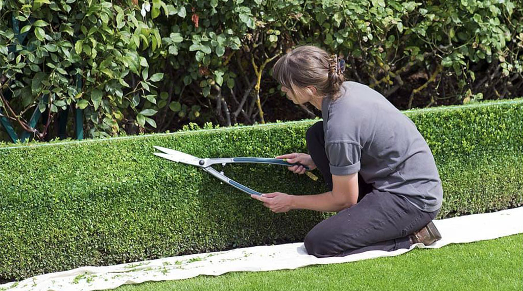 Hedging and Shearing Tips