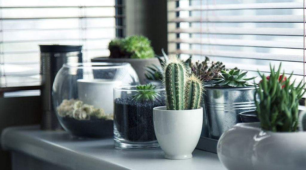 Indoor Mini Garden