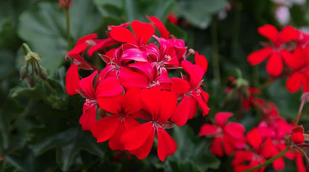 Overwintering Garden Plants
