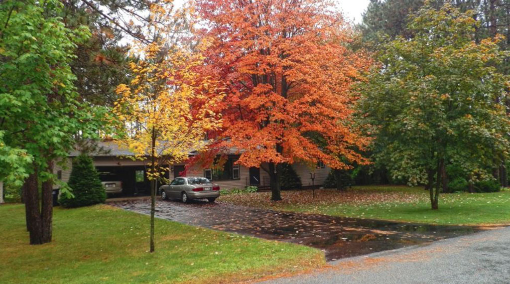 Trees by Driveway by Zone
