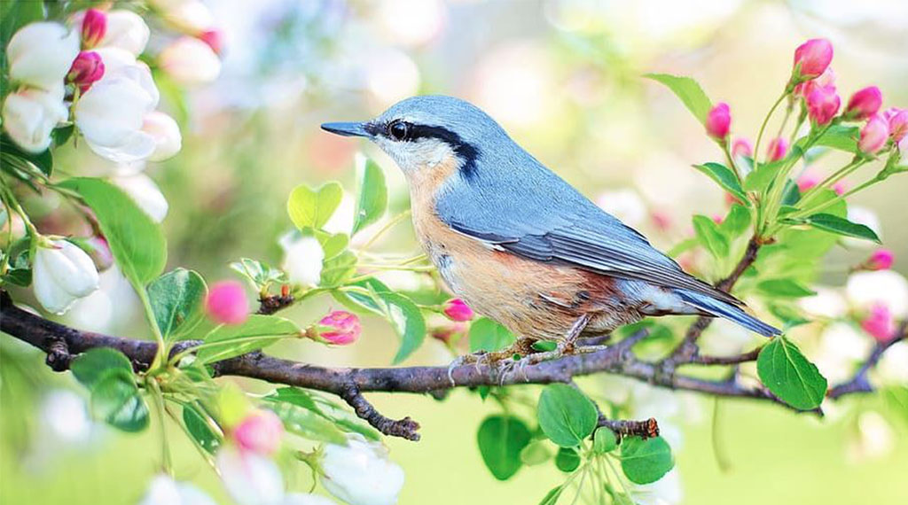 Trees and Shrubs that Attract Birds