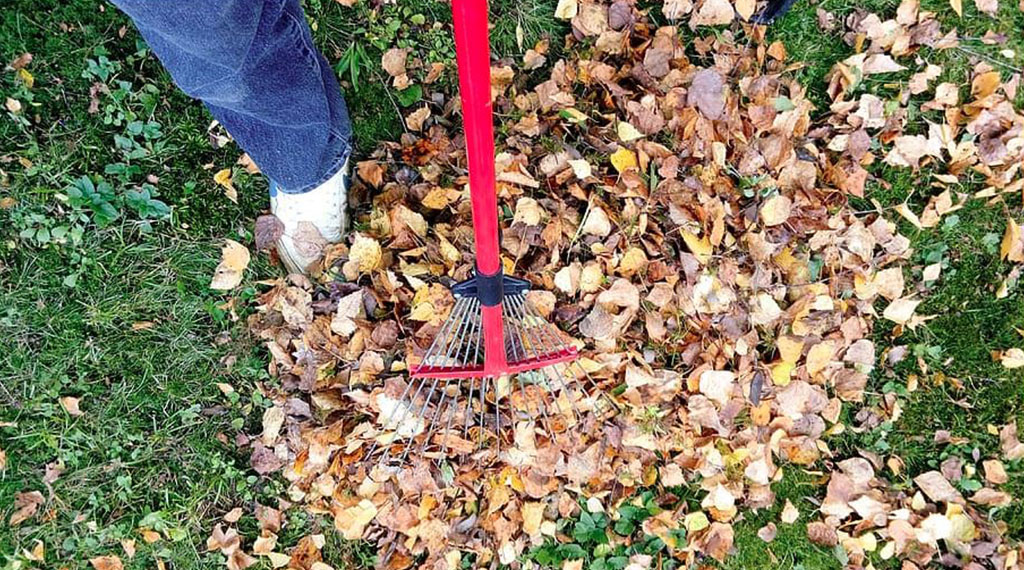 Make Your Yard Look Great Year Round