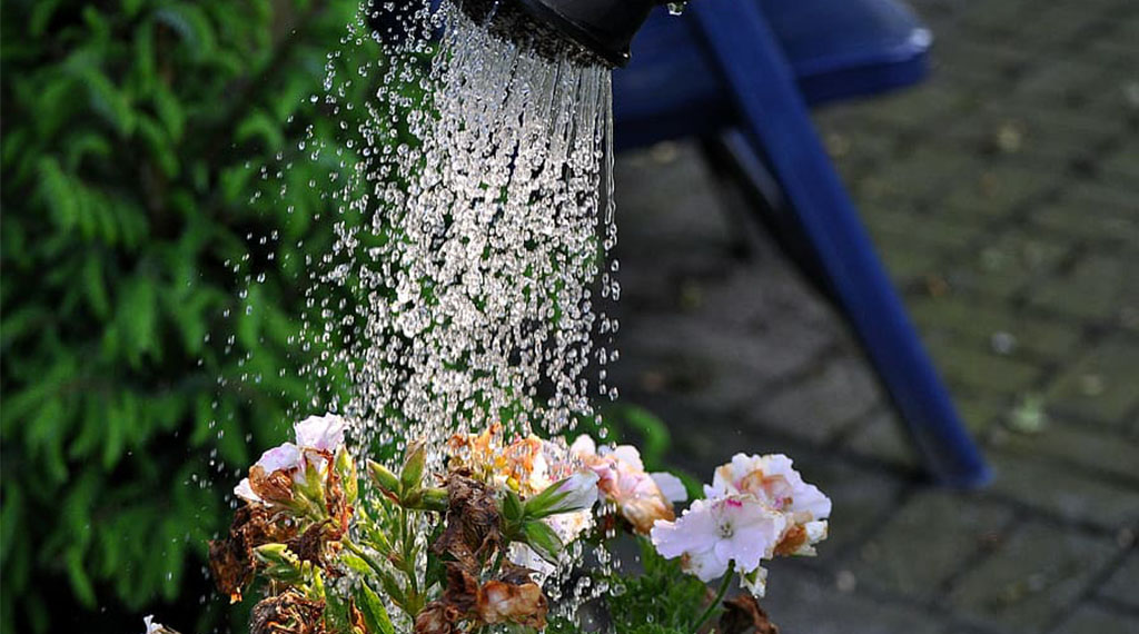 Spring Drought Tips