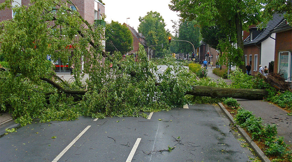 Caring for Trees Before and After Storms